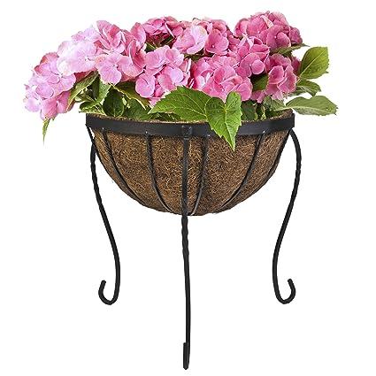Amazon.com: CobraCo Canterbury Cesto de flores planta ...