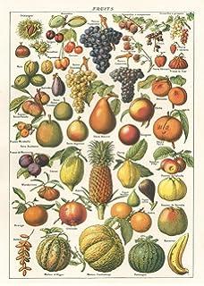 cavallini larousse fruit chart poster wrap decoupage - Le Jardin