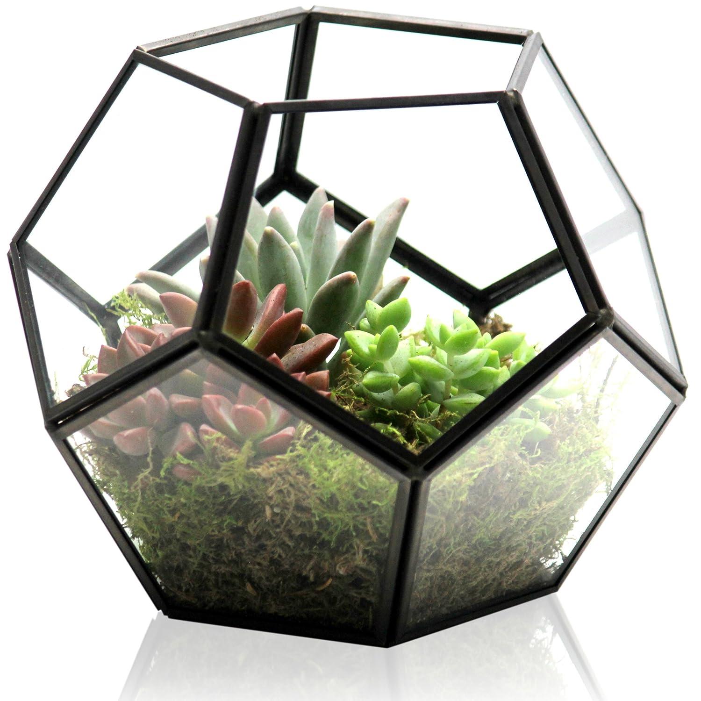 Amazon Com Kibaga Geometric Terrarium Modern Indoor Plant