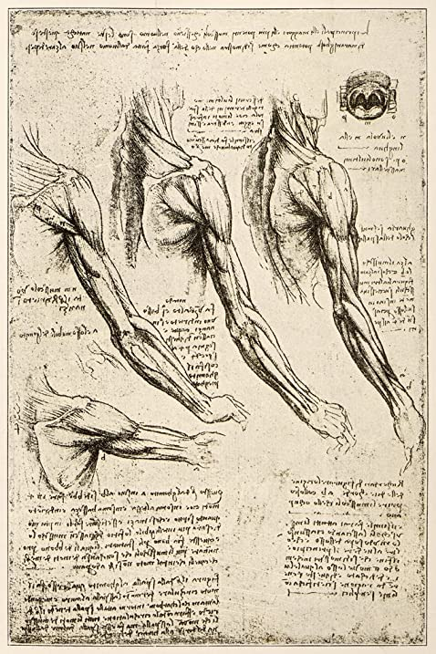 Amazon Leonardos Sketches And Drawings Anatomy Arm Muscles Art