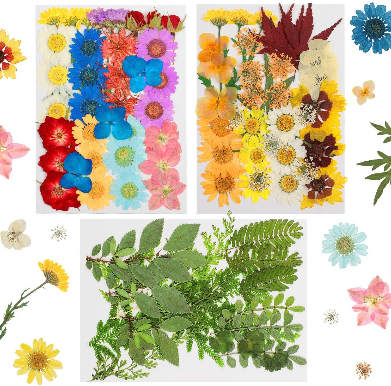 93 flores naturales secas reales, múltiples flores prensadas, coloridas y secas, flores surtidas para manualidades de resina, decoración de uñas, suministros florales