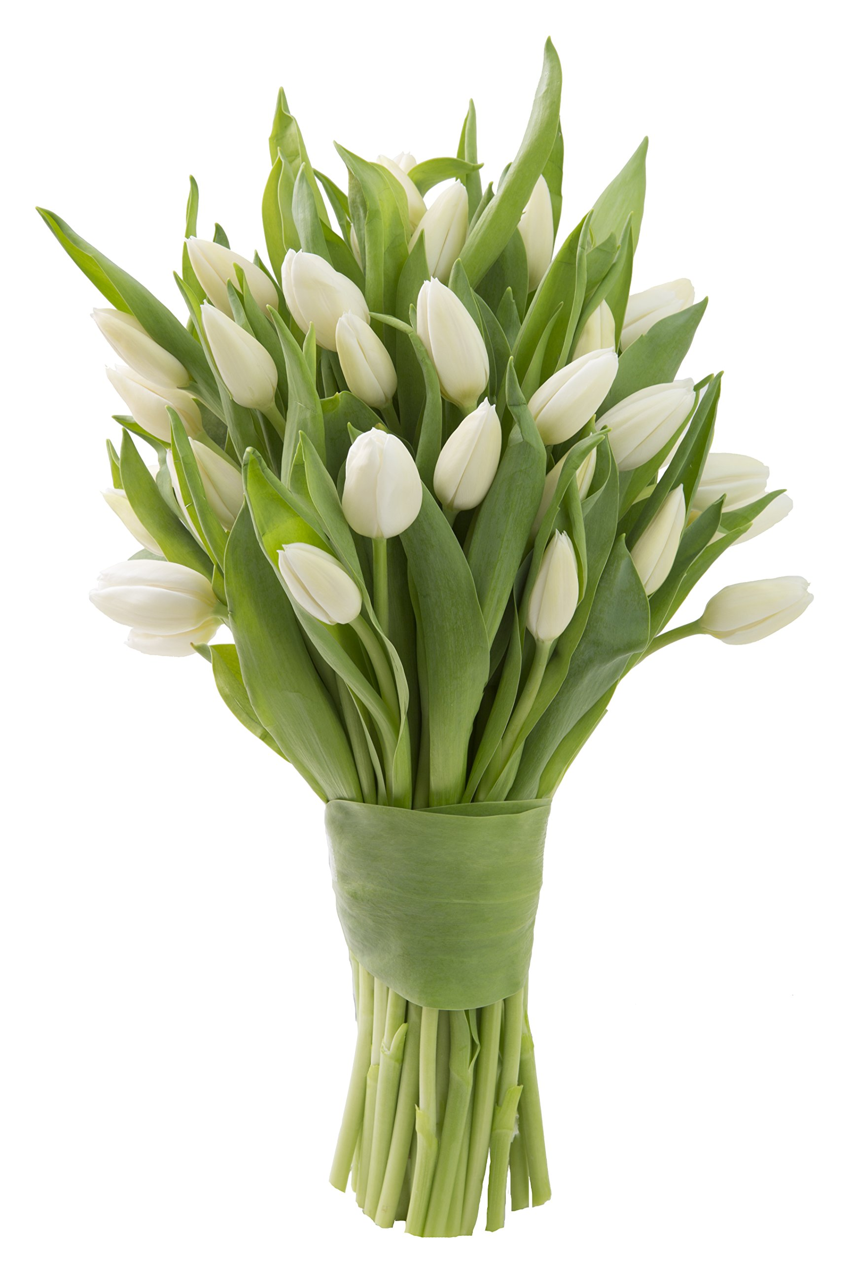 Blooms2Door 30 White Tulips (Farm-Fresh Flowers, Cut-to-Order, and Homegrown in the USA)
