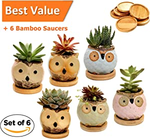 Win A Free Ceramic Owl Succulent Planter Mini Size Set of 6 with Bamboo...