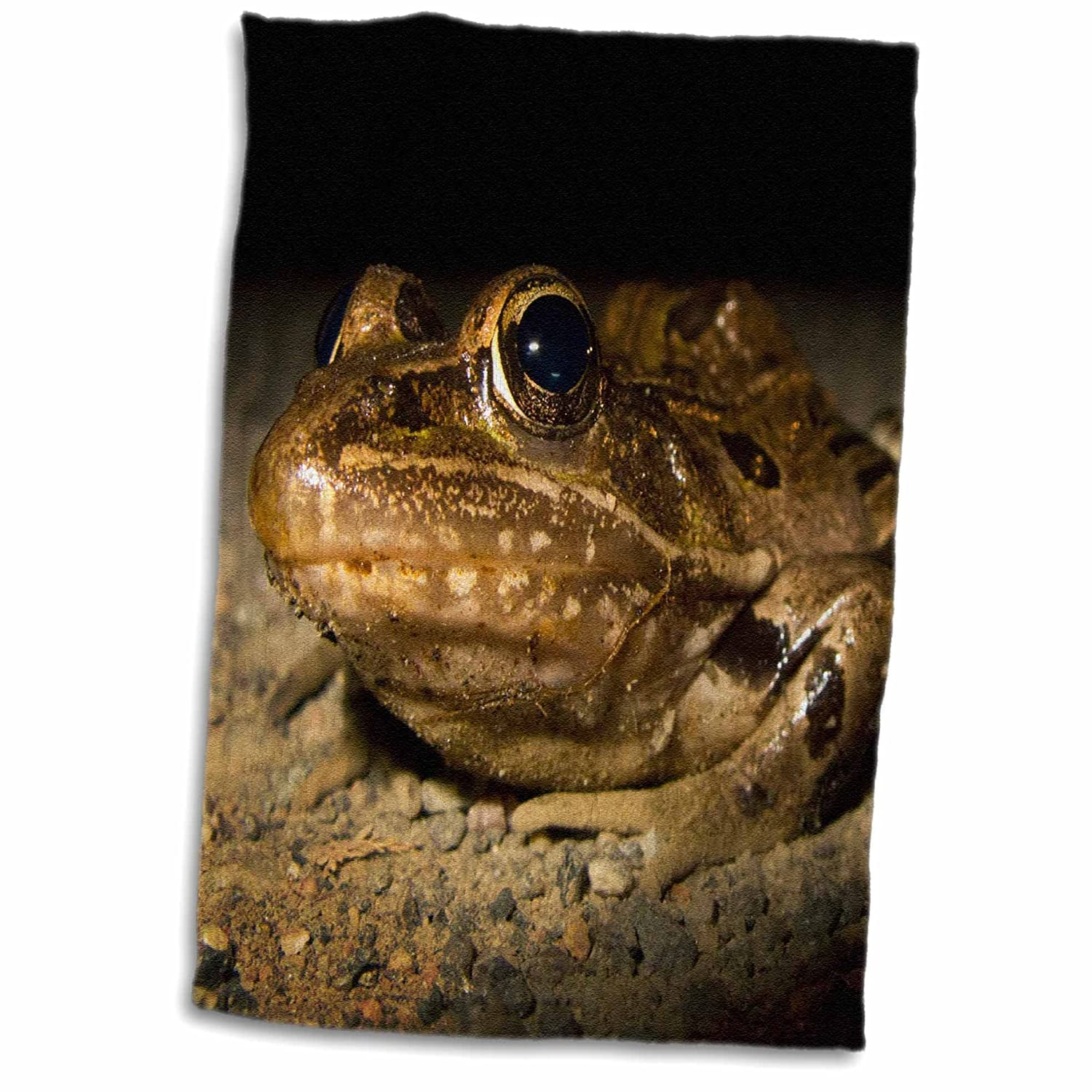 3D Rose New Jersey-Swamp NWR. Southern Leopard Frog-Us31 Jgl0034-Jim Gilbert Hand/Sports Towel 15 x 22