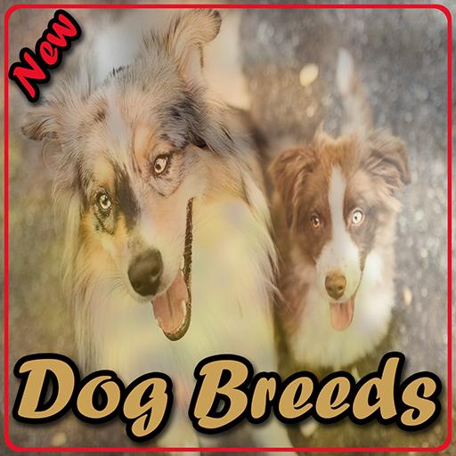 Dog Breeds ()