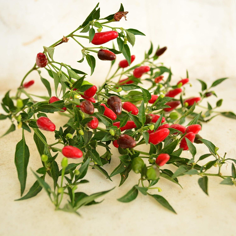 25 Super-Hot Thai Bird Premium Pepper Seeds-T 69