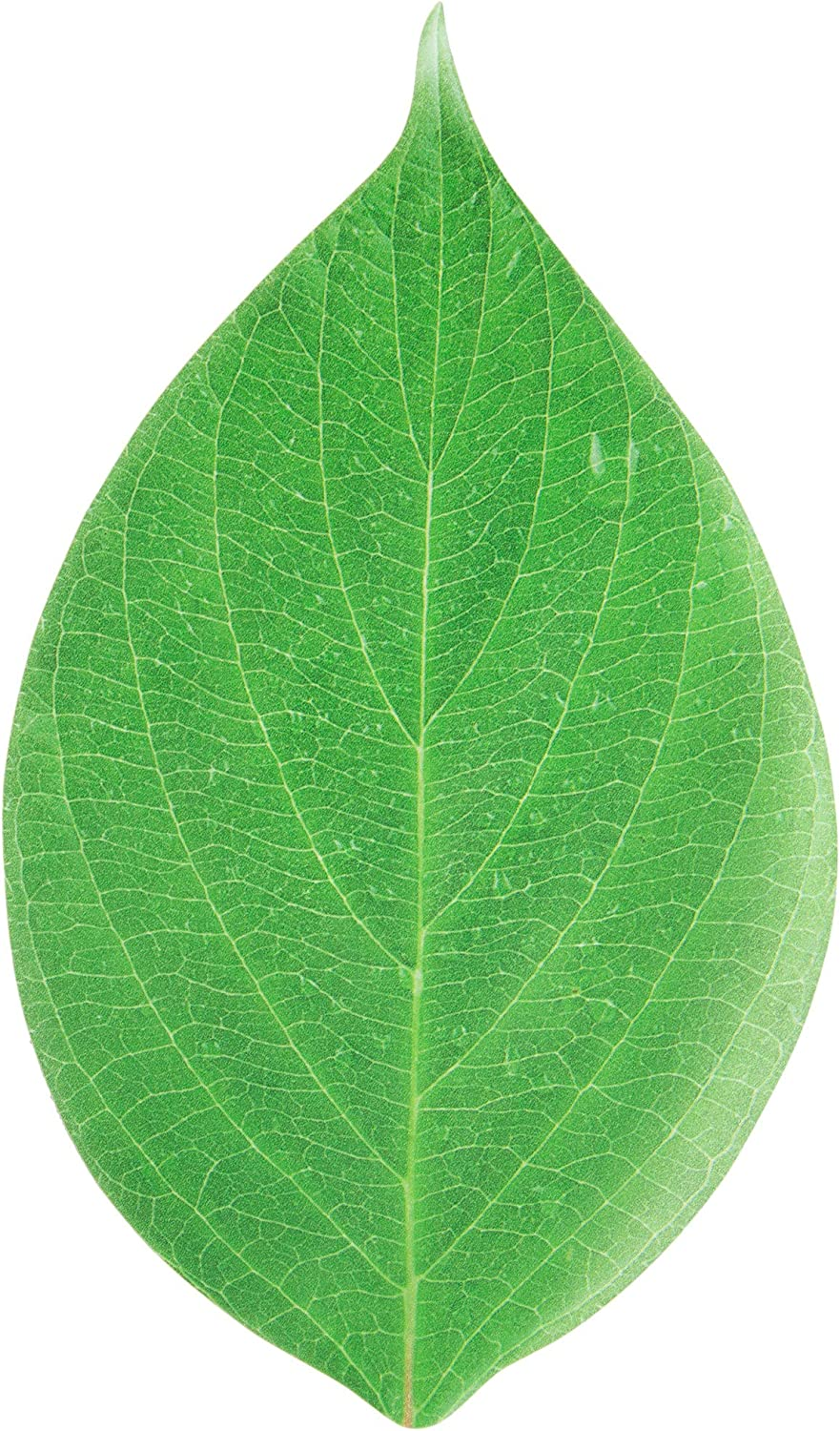 Disposable Cheese Board Paper, Set of 10, Vibrant Green Leaf 12 x 7, Perfect Cheese Board Accessories for Meat and Cheese Boards, Travel, Weddings