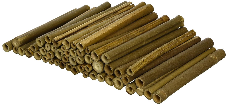 Wildlife World Lot de 50 tubes en bois pour abeilles solitaires BTW1
