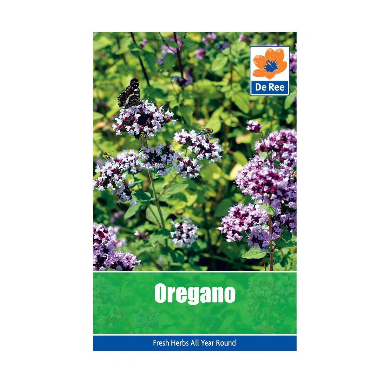 Oregano Seeds Bulbs and Seeds Direct