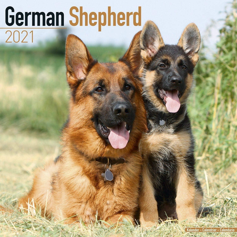 Amazon.: German Shepherd Calendar 2021   Dog Breed Calendar