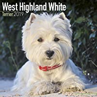 West Highland White Terrier Calendar 2019