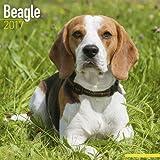 Beagle Calendar 2017 (Square)
