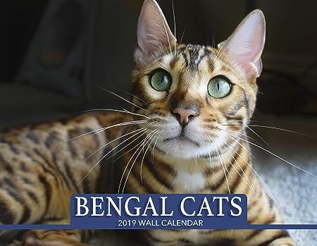 Calendario de Pared de Gato Bengal 2019: Amazon.es: Hogar