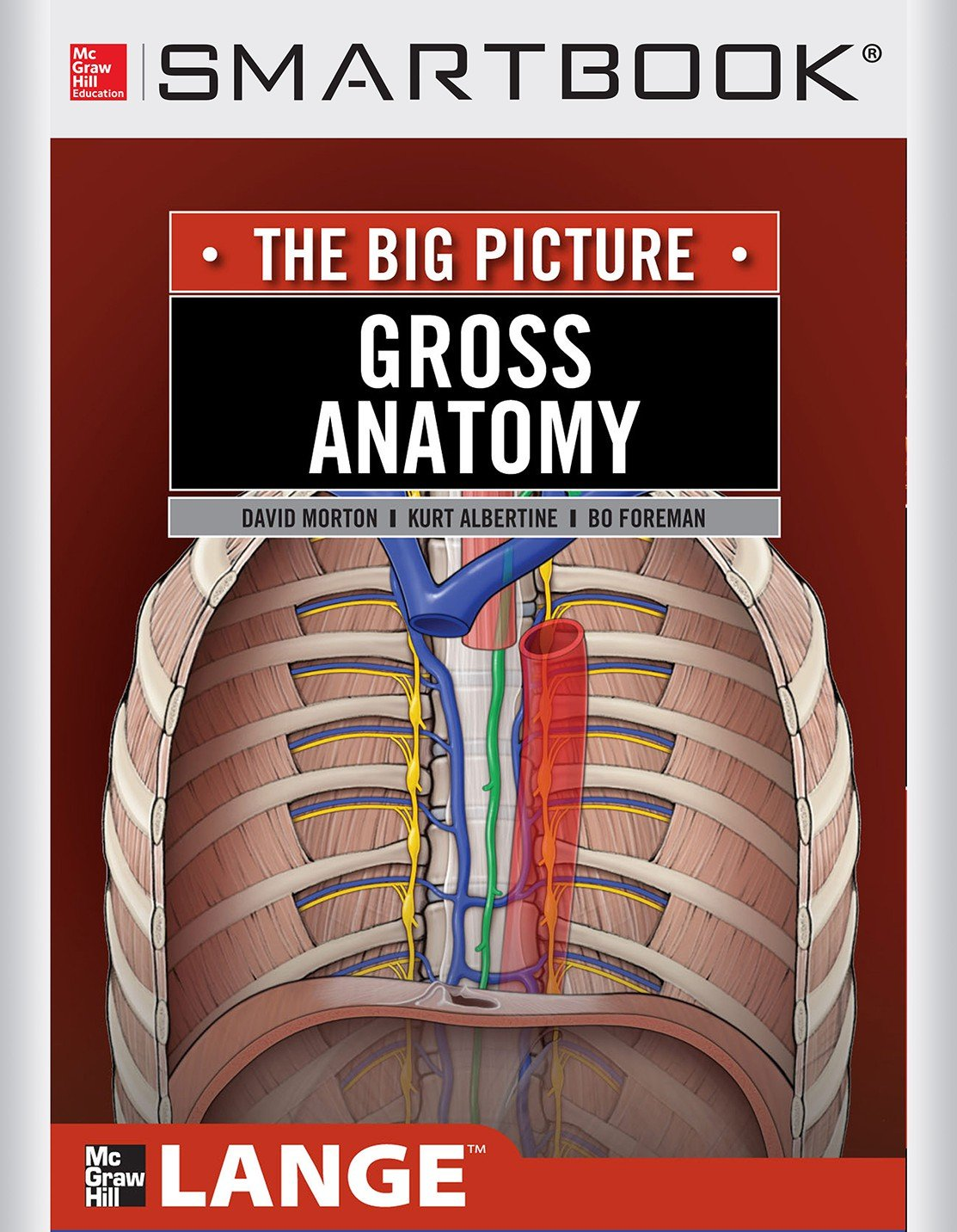 Amazon Gross Anatomy The Big Picture 2nd Edition Smartbook