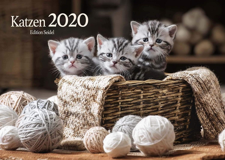 Edition Seidel Katzen Premium Kalender 2020 DIN A3 Wandkalender Katzenkalender