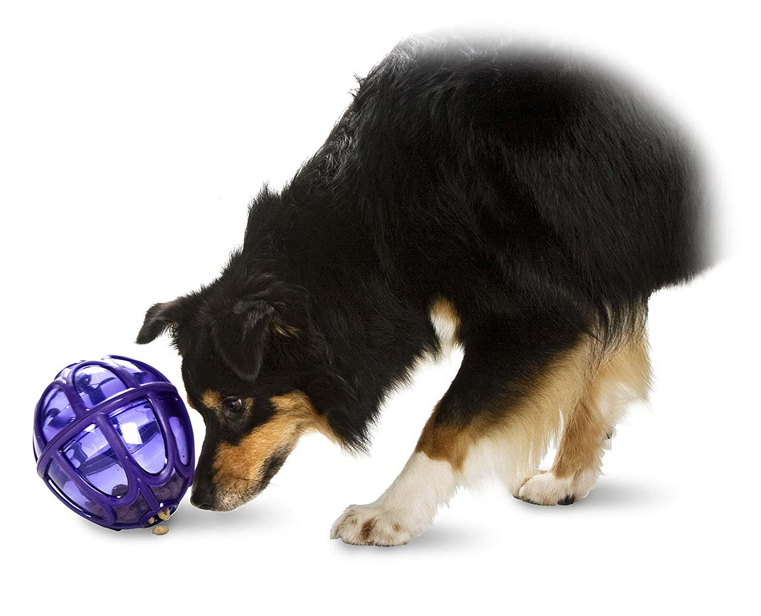 Sports with a dog - choosing the right toy