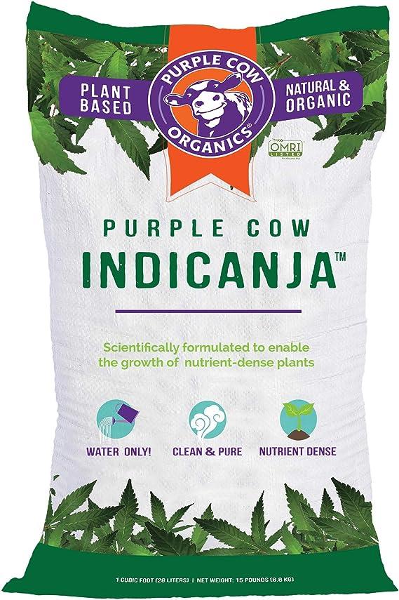 Purple Cow Indicanja