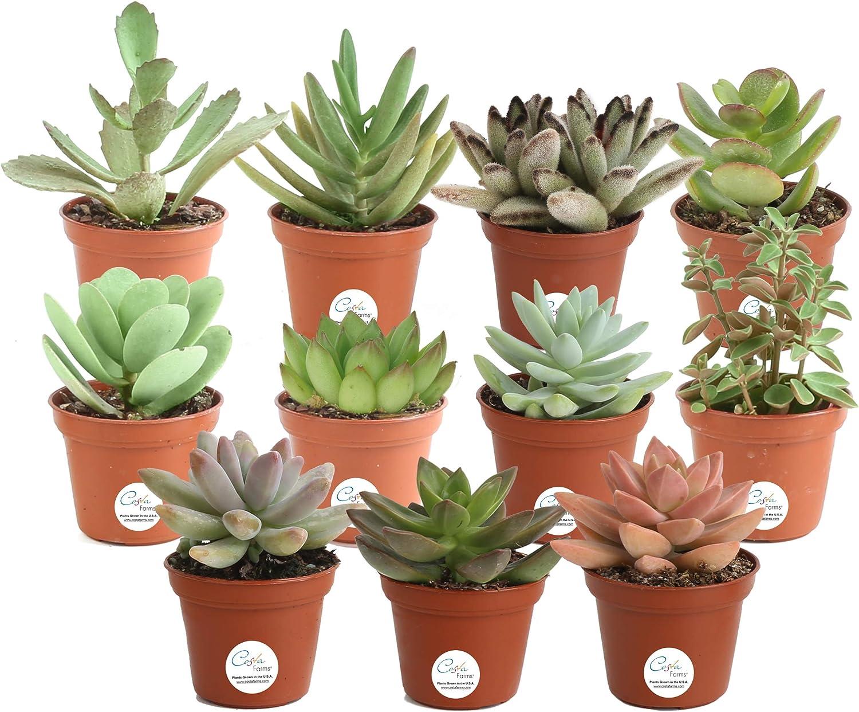 indoor plant grower