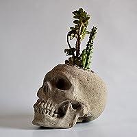 Galeria de Ariel Cráneo maceta de concreto pulido artesanal