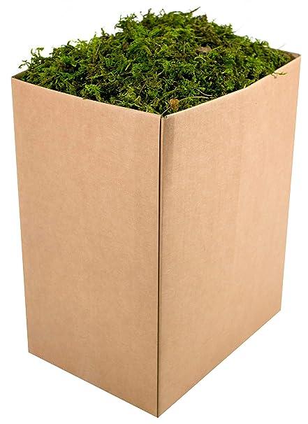 25326 5lbs Fresh Green SuperMoss Forest Moss Preserved