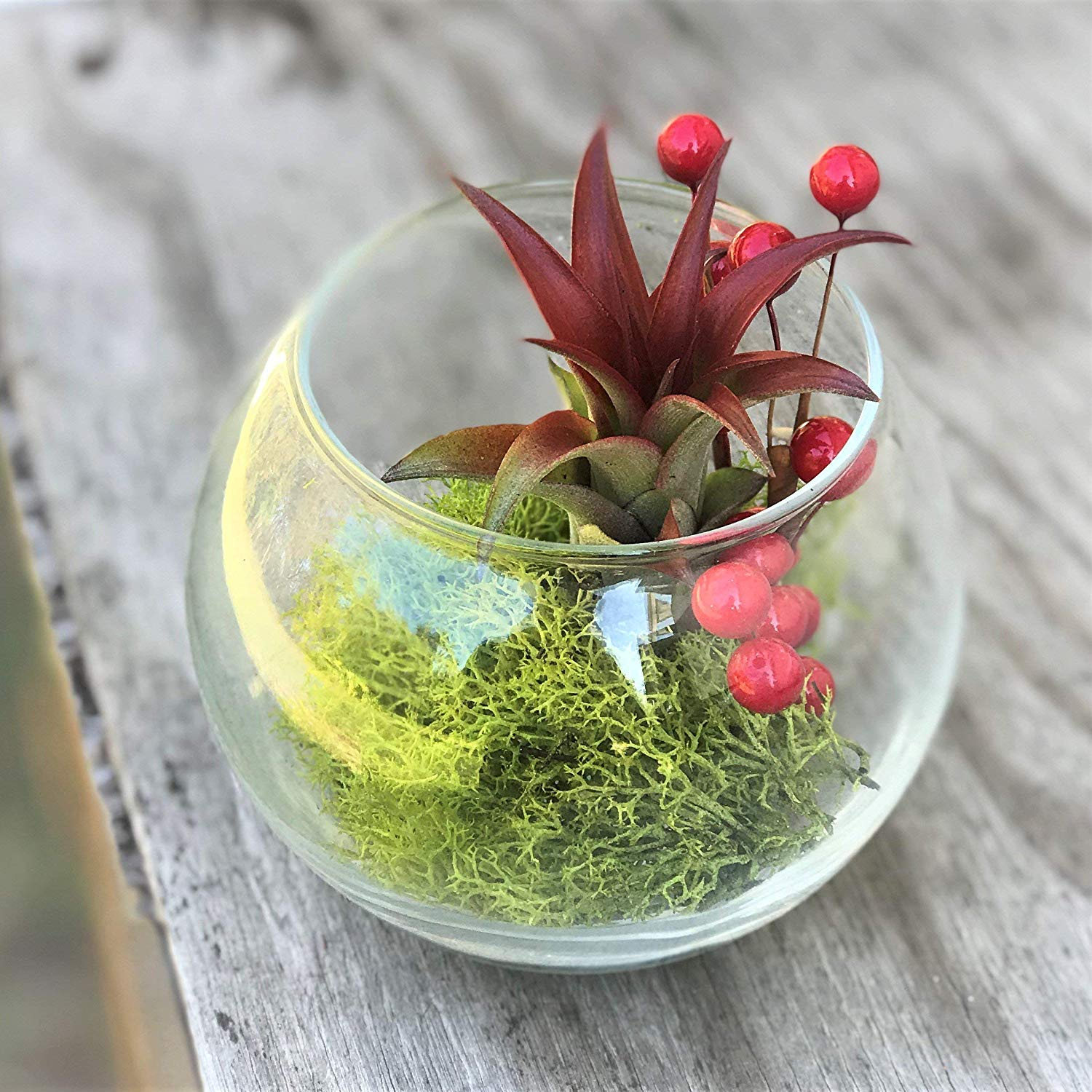 Wine Pack of 8oz BirchForest Spanish Moss Preserved Floral Moss