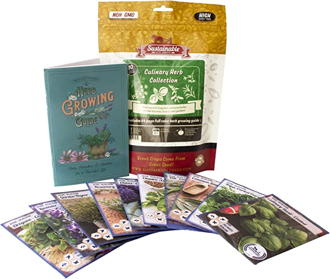 Mint HERB COLLECTION 4- selection of 6 Fresh Herb Seeds Oregano Rosemary /& Thyme Sweet Basil Coriander