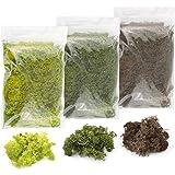 War World Scenics Lichen Moss Model Foliage Multi-Pack 3 x 20g (Light Green, Dark Green, Brown) –Railway Modelling…