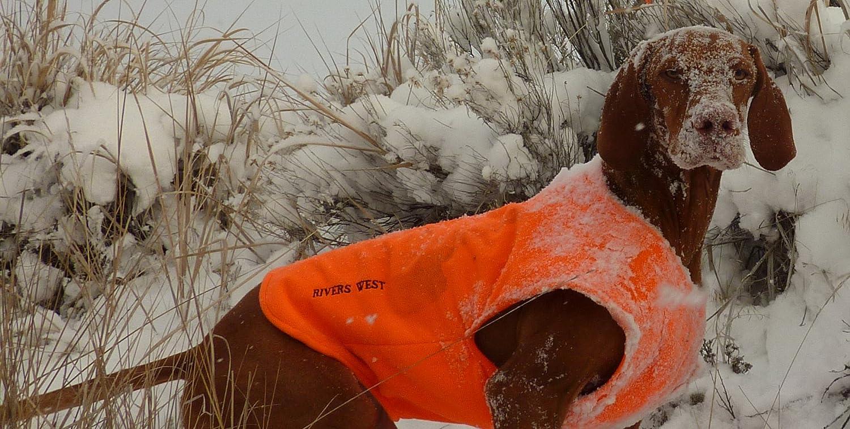 12652e3912381 Amazon.com: Rivers West Pointer Vest, Color: Blaze Orange (3110-ORG): Pet  Supplies