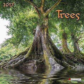 Calendario 2017 árboles - naturaleza - Sequoia - árbol ...