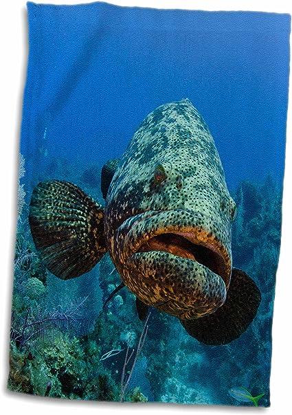 3d Rose Atlantic Goliath Grouper Jardines De La Reina Np Cuba Caribbean Twl 205721 1 Towel 15 X 22 Home Kitchen Amazon Com