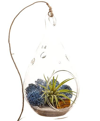 Bliss Gardens Mini Air Plant Terrarium With 5u0026quot; Teardrop Glass, Blue  Moss, White
