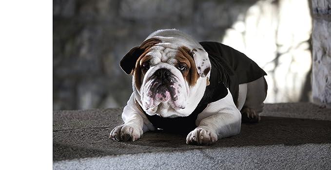 Croci - Chaleco Acolchado específico para Perro Bulldog francés, Bulldog inglés y Chaqueta de Carlino para Perros, 55 cm: Amazon.es: Productos para mascotas