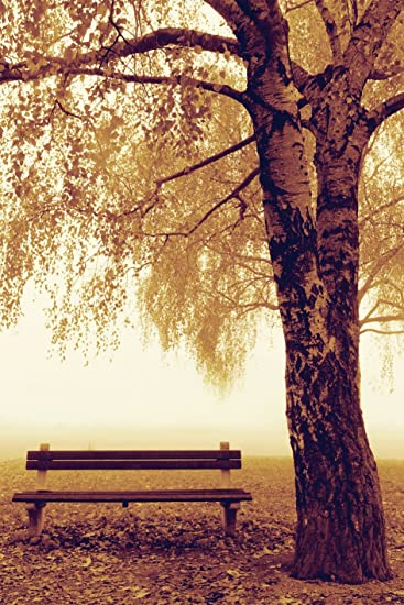 Amazoncom Park Bench Next To Tree Photography Decorative Art