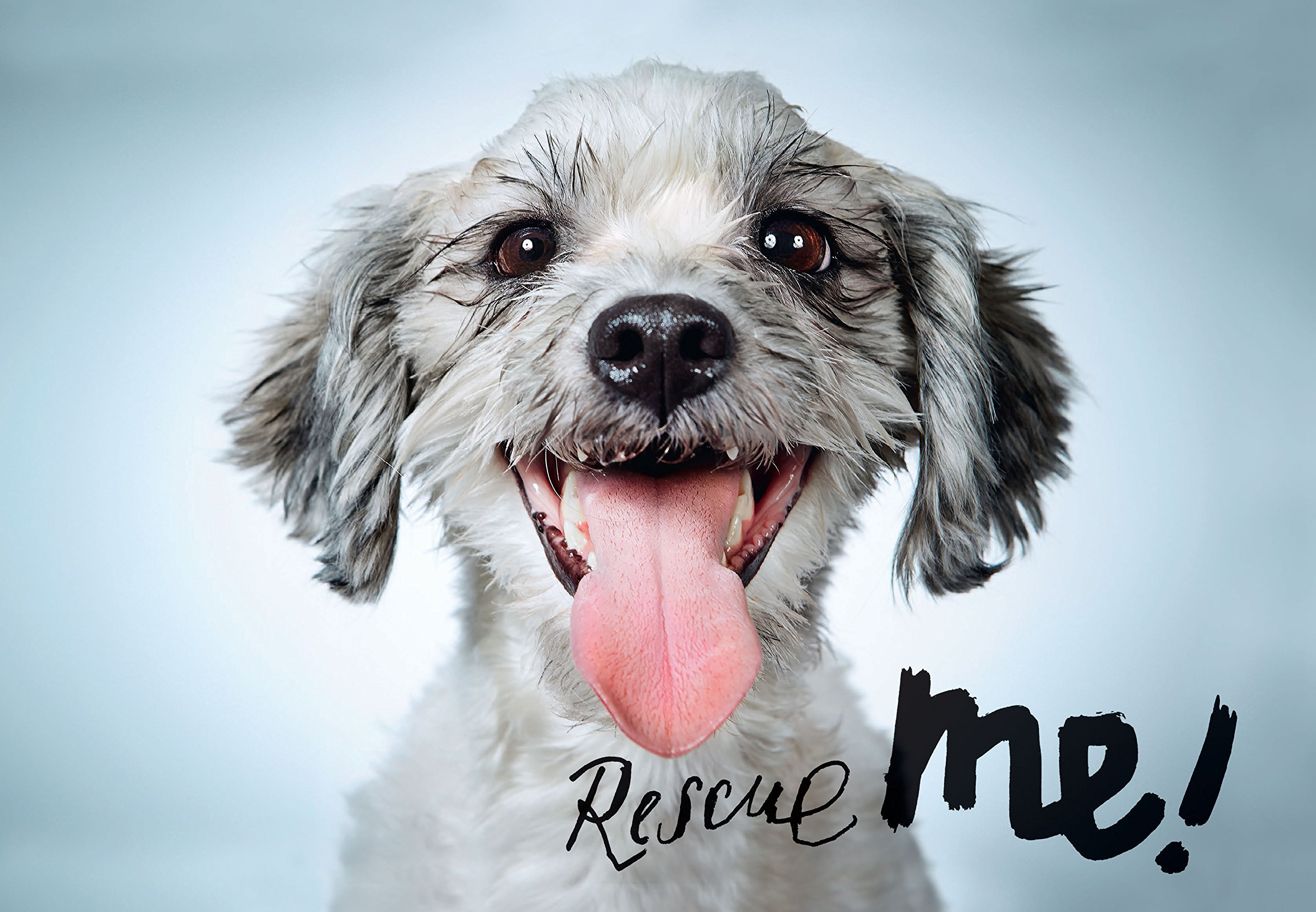 Rescue Me!: Dog Adoption Portraits and Stories from New York City