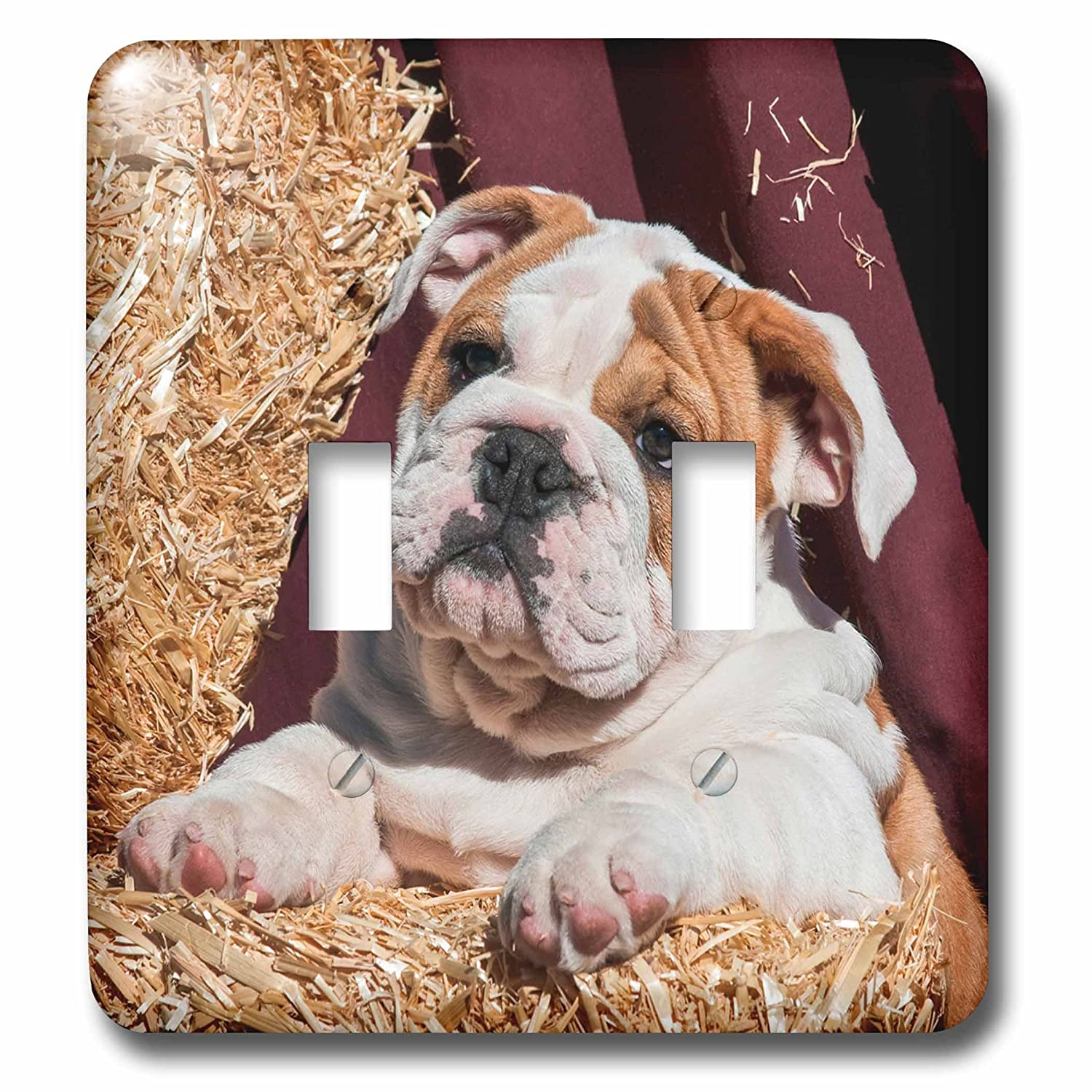 Mixed 3dRose lsp/_258128/_2 Bulldog Puppy Lying on Hay Bales Mr Toggle Switch