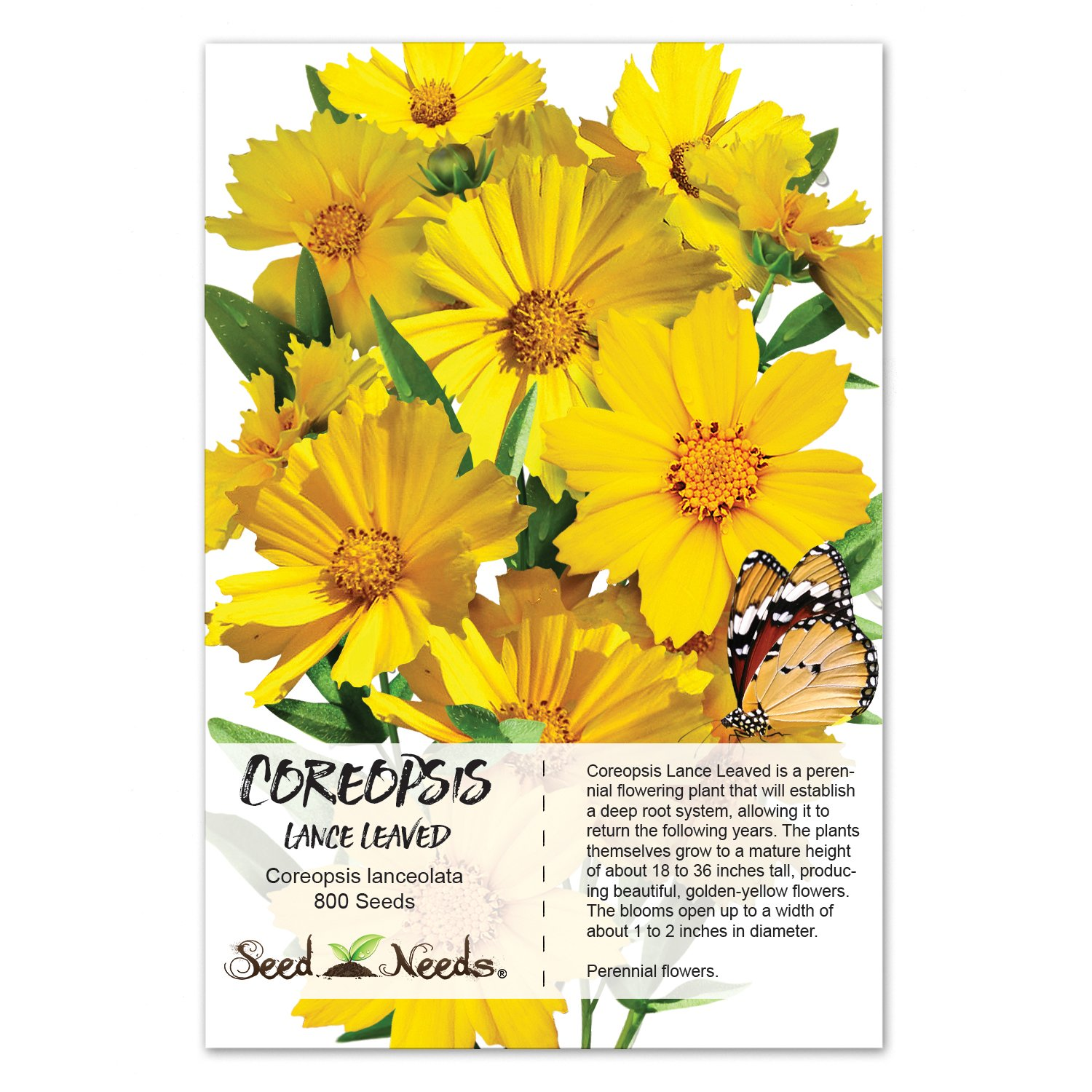 Amazon Package Of 800 Seeds Lance Leaved Coreopsis Coreopsis