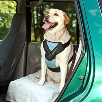 Dog Car Harness >> Bergan Dog Auto Harness With Tether
