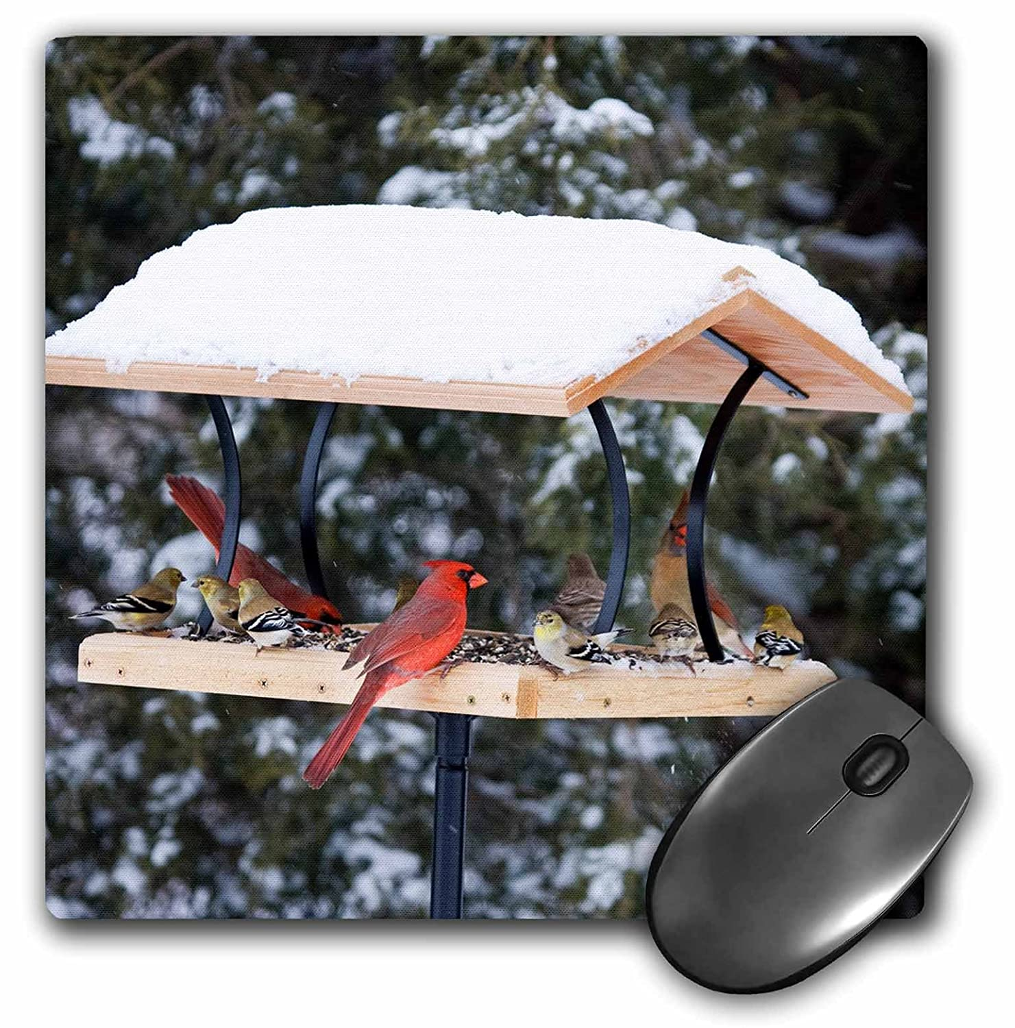 mp/_209195/_1 3dRose Northern Cardinals /& American Goldfinches 8 by 8 Illinois Mouse Pad USA
