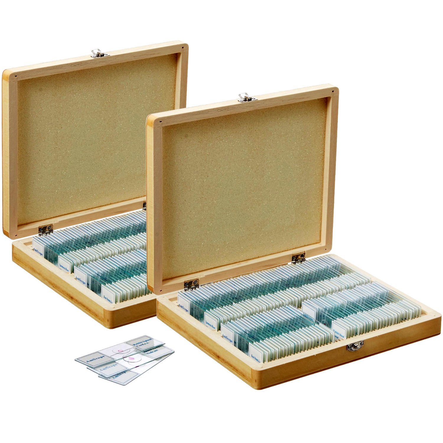 AmScope PS200A Prepared Microscope Slide Set for Basic Biological Science Education, 200 Slides, Set A, Includes Fitted Wooden Case by AmScope