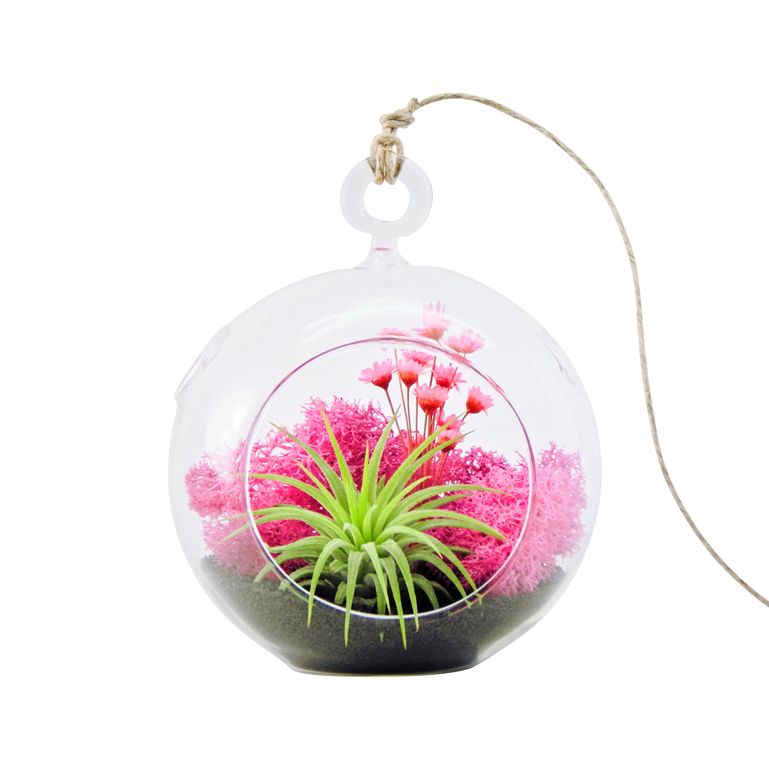 Bliss Gardens Air Plant Terrarium Kit with 4'' Round Glass/Pink Flowers/Tillandsia Mother's Day Gift/Pink Paradise