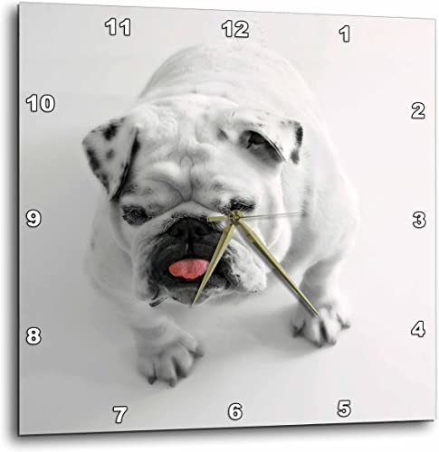 3dRose DPP_204255_3 Print of Cute Bulldog on White Background Wall Clock, 15 by 15