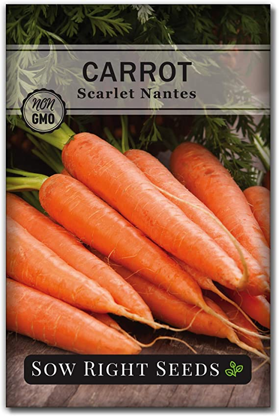 300 Seeds Rainbow Carrot Orange Plant Vegetable Summer Garden Plant Learn Plant