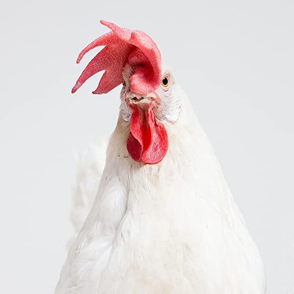 101 Hilarious Chicken Jokes Riddles For Kids Laugh Out Loud With