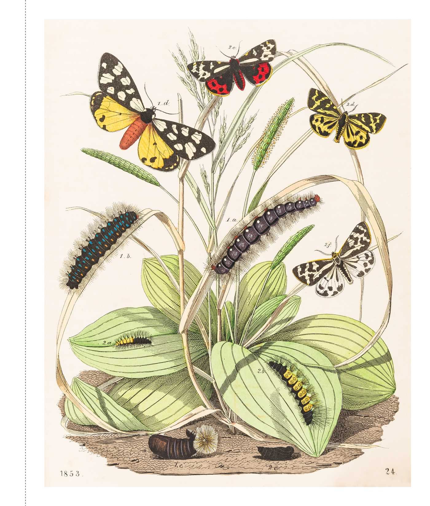 Instant Wall Art - Butterfly Botanical Prints: 45 Ready-to-Frame ...
