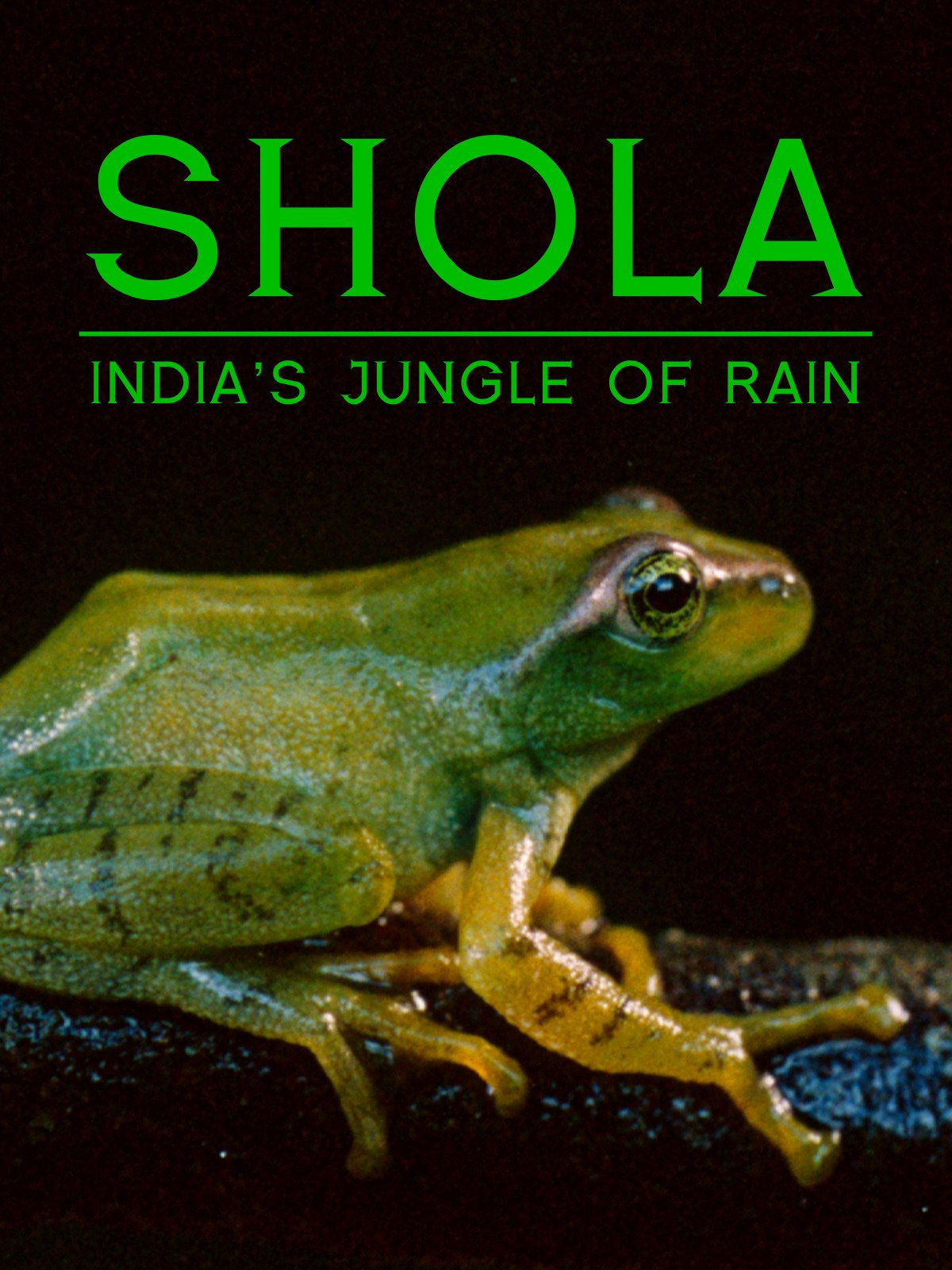 Shola: India's Jungle of Rain on Amazon Prime Video UK