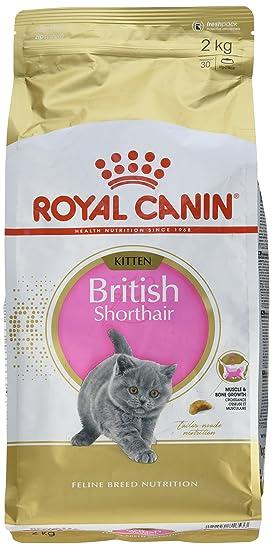 ROYAL CANIN - Comida para Gatitos - British Shorthair Completa 2 kg: Amazon.es: Productos para mascotas