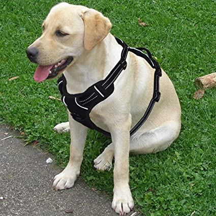 Amazon.com : ENJOY PET Dog Harness Medium Dogs, No Pull Dog Harness