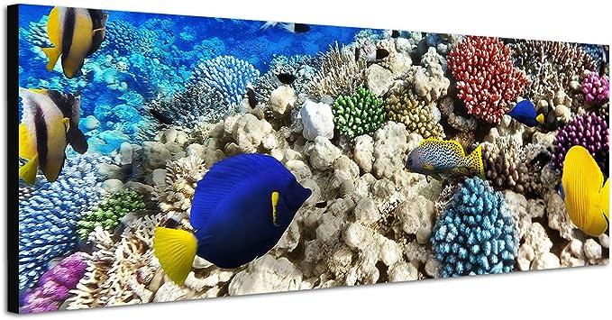 Leinwandbild Fische Korallen Ozean Meer Kat6 Riff Unterwasser Leinwand Bild Bilder Tierwelt Wandbild Holz Leinwandbilder Kunstdruck vom Hersteller 9AB768 Leinwand Gr/ö/ße 1:40x20cm