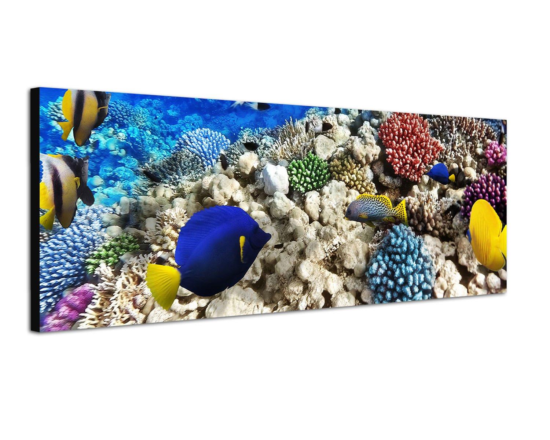 Panoramabild auf Leinwand und Keilrahmen 120x40cm Unterwasser Riff Fische Korallen Paul Sinus Art