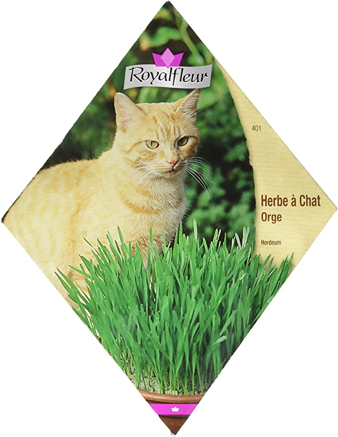 Royal Fleur - Semilla Hierba para Gato (Cebada) 1cor: Amazon.es: Jardín
